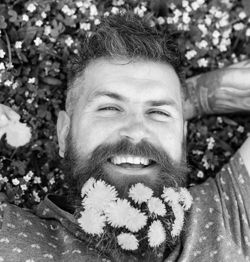 pojęcia ręki kieszeni relaksu zegarka nadgarstek Brodaty mężczyzna z dandelion kwiatami w brodzie kłaść na łące, trawy tło Mężczy obraz stock