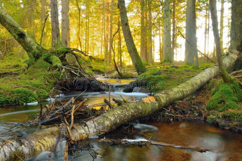 pojęcia strumienia czystego świeżej wody obraz stock