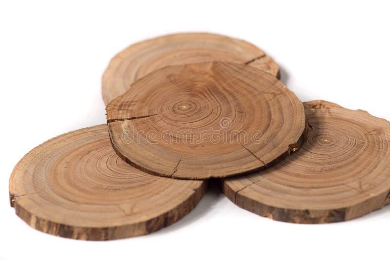 Pojęcie dendrochronologia drzewni bagażników wyraźnie widoczni roczni pierścionki, round plasterki drzewa, biały tło obrazy royalty free