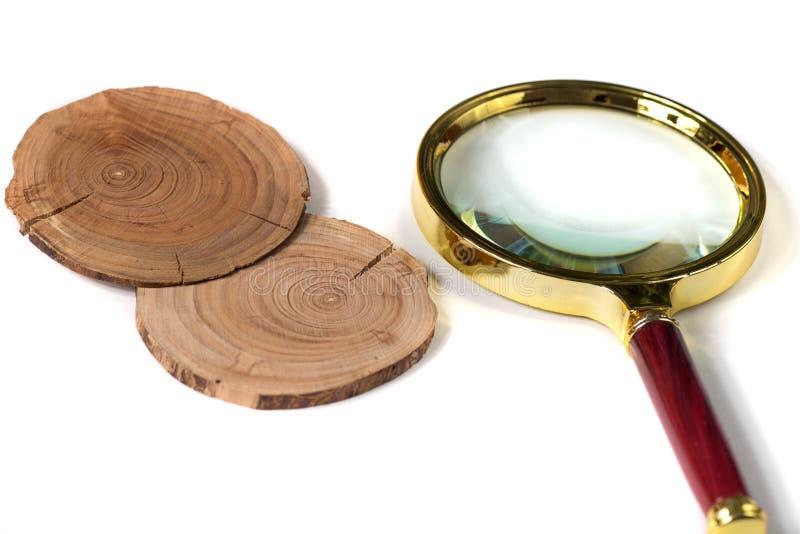 Pojęcie dendrochronologia drzewni bagażniki wyraźnie widoczny roczny Rin obrazy stock