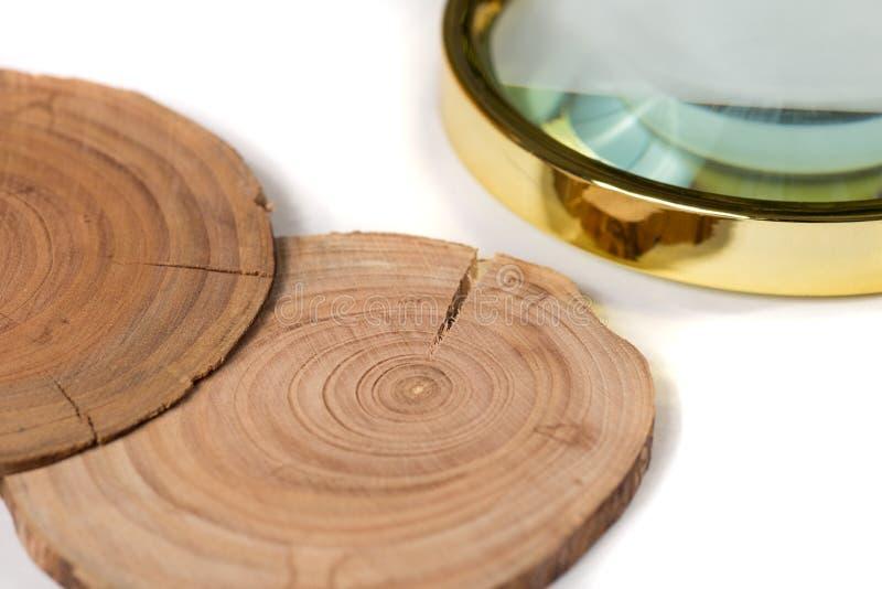 Pojęcie dendrochronologia drzewni bagażniki wyraźnie widoczny roczny Rin obraz stock