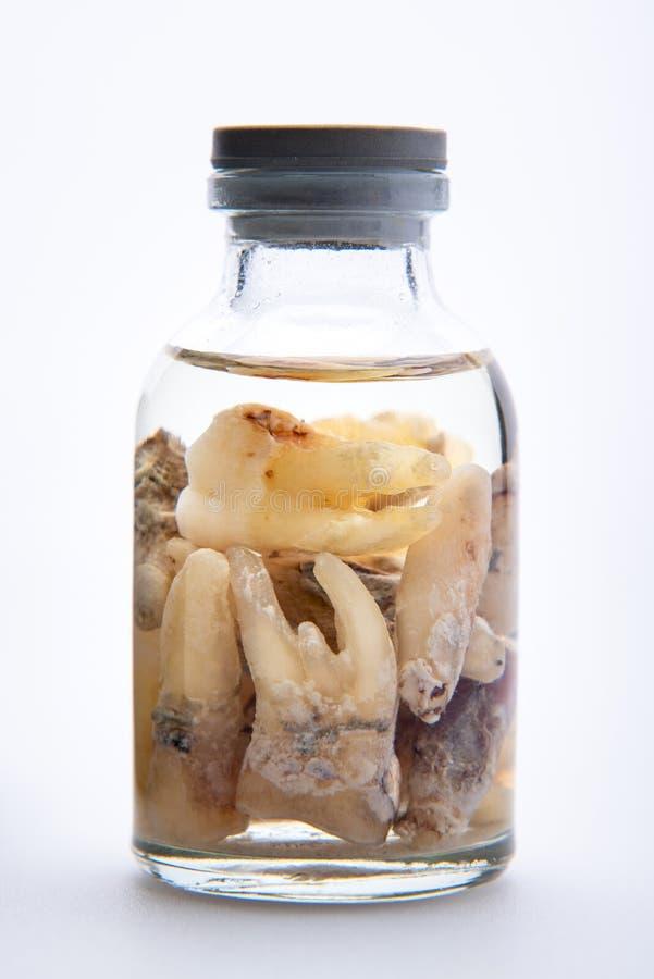 Pojęcie - dentysty ` s trofeum Set usuwający zęby w szklanej medycznej buteleczce z etylowym alkoholem duży kropli zieleni liść m zdjęcie stock