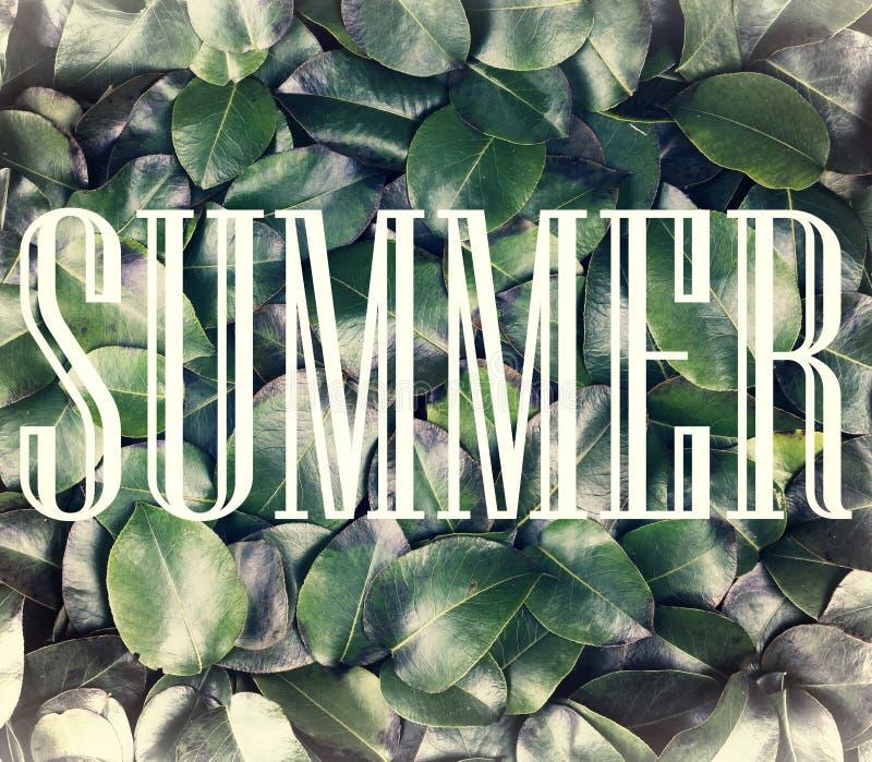 Pojęcie: lato natura, wakacje, podróż Wpisowy lato w białej ramie przeciw tłu świeży i obraz stock