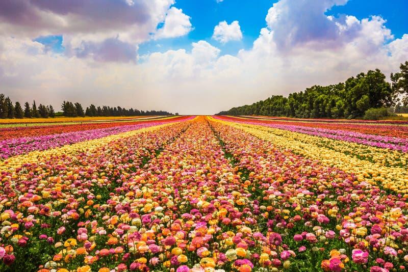 Pojęcie nowożytny przemysłowy floriculture obrazy royalty free