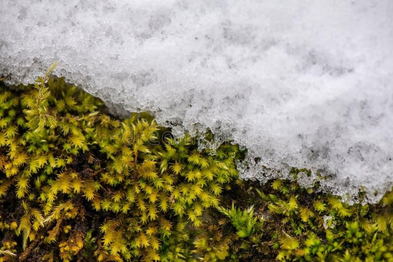 Pojęcie odmienianie pogoda i sezony zdjęcie stock