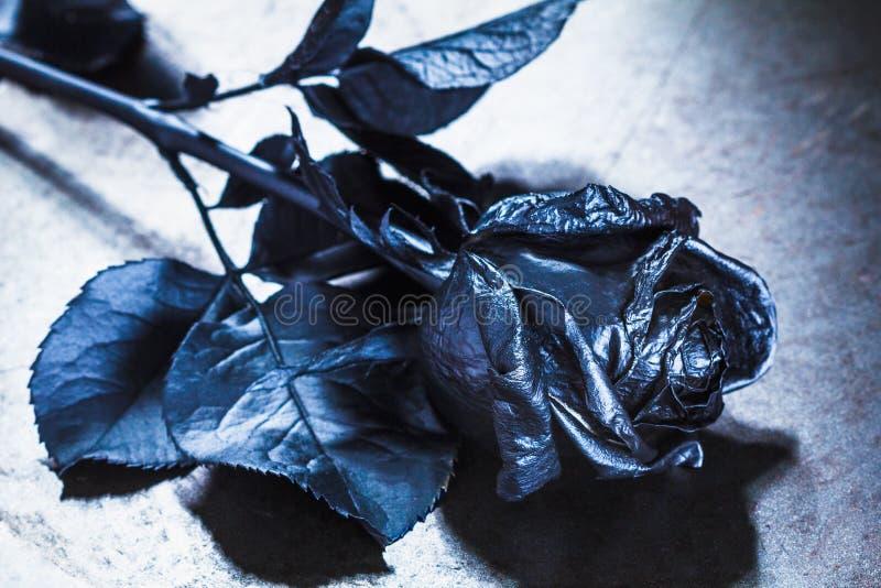 Pojęcie, symbol stroskania, melancholicznego i smutnego nastrój, Depresja i miłość czarna róża obraz stock