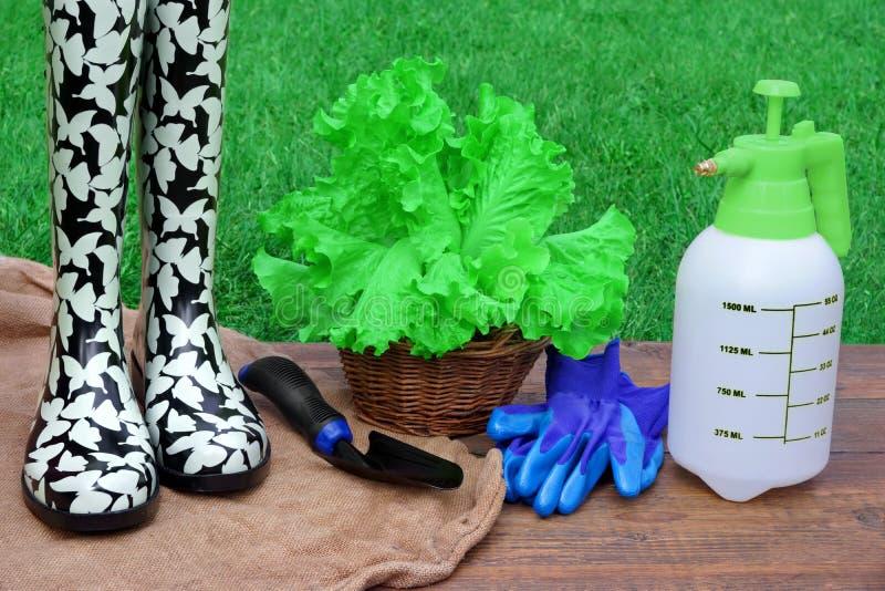 Download Pojęcia ogrodnictwo obraz stock. Obraz złożonej z housekeeping - 53783461