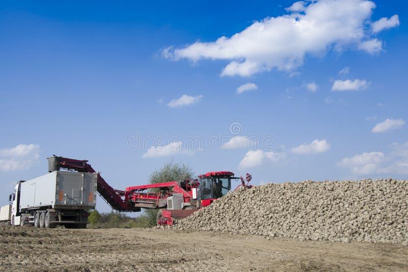Pojazd zbiera sugarbeets obrazy stock