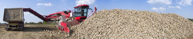 Pojazd zbiera sugarbeets zdjęcia stock