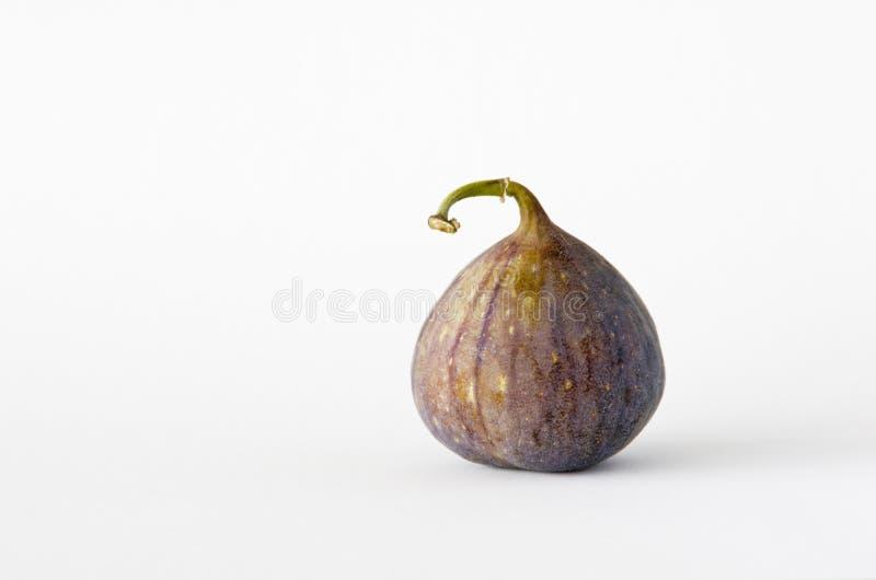 Pojedyncza świeża figa na białym tle zdjęcie stock