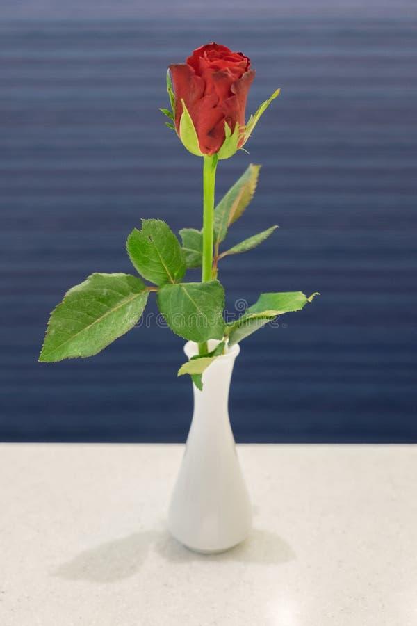 Pojedyncza czerwieni róża w białej ceramicznej wazie na bielu stole zdjęcia royalty free