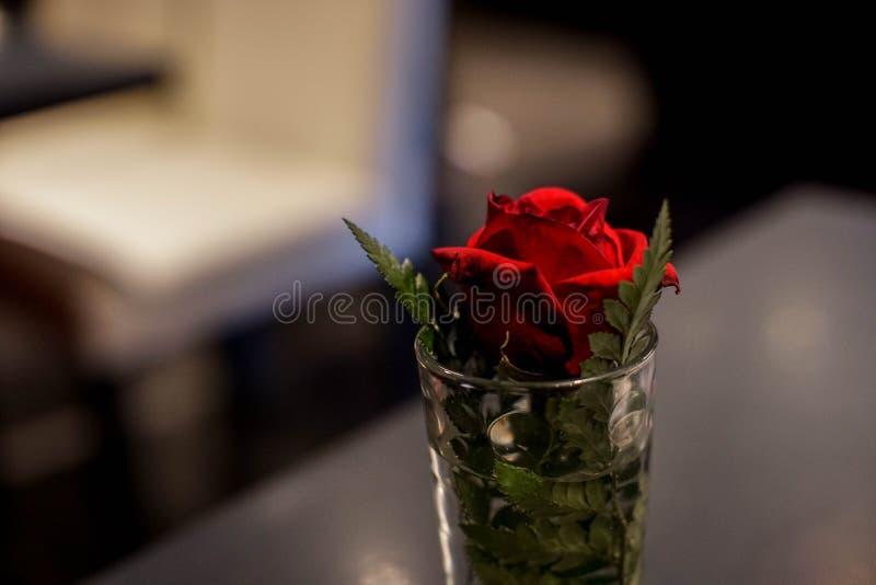 Pojedyncza czerwieni róża w szklanej wazie zdjęcia stock