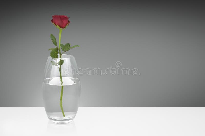 Pojedyncza czerwieni róża w szklanej wazie zdjęcia royalty free