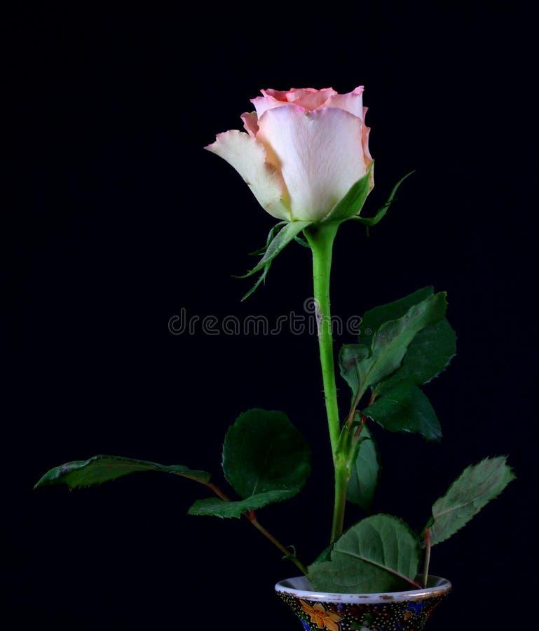 Pojedyncza czerwieni róża w wazie, odizolowywającej przeciw czarnemu tłu zdjęcie stock