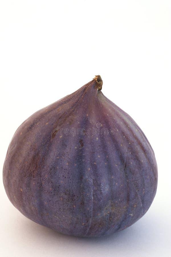 pojedyncza fig zdjęcie stock