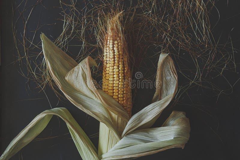Pojedyncza kukurudza na Cob na czerni zdjęcia royalty free