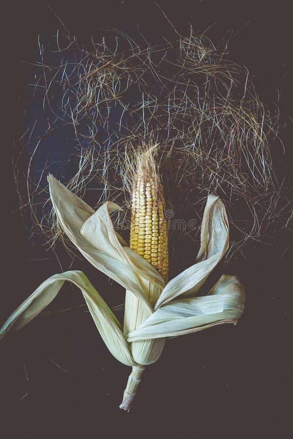 Pojedyncza kukurudza na Cob na czerni obraz stock