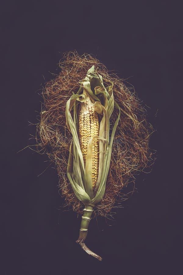 Pojedyncza kukurudza na Cob na czerni fotografia royalty free