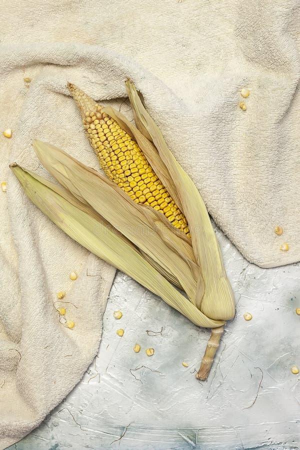 Pojedyncza kukurudza na jaskrawym tle fotografia royalty free