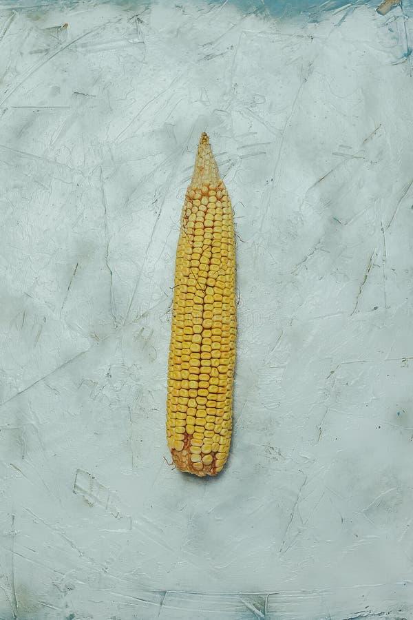 Pojedyncza kukurudza na jaskrawym tle zdjęcie royalty free