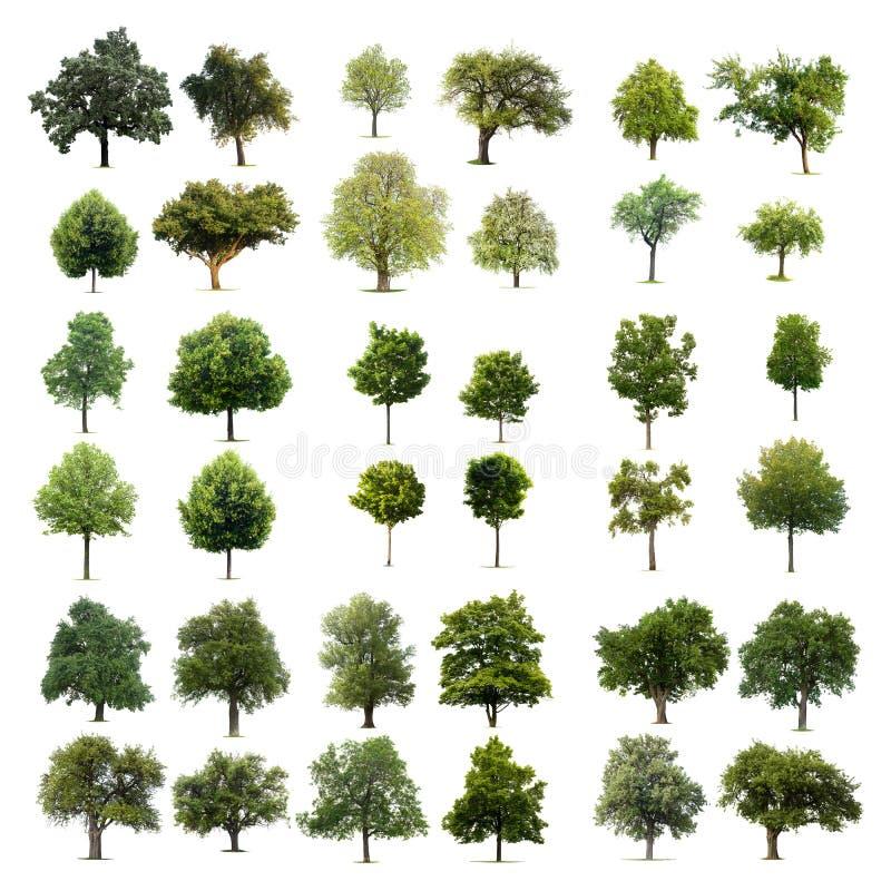 pojedyncze drzewa obrazy stock