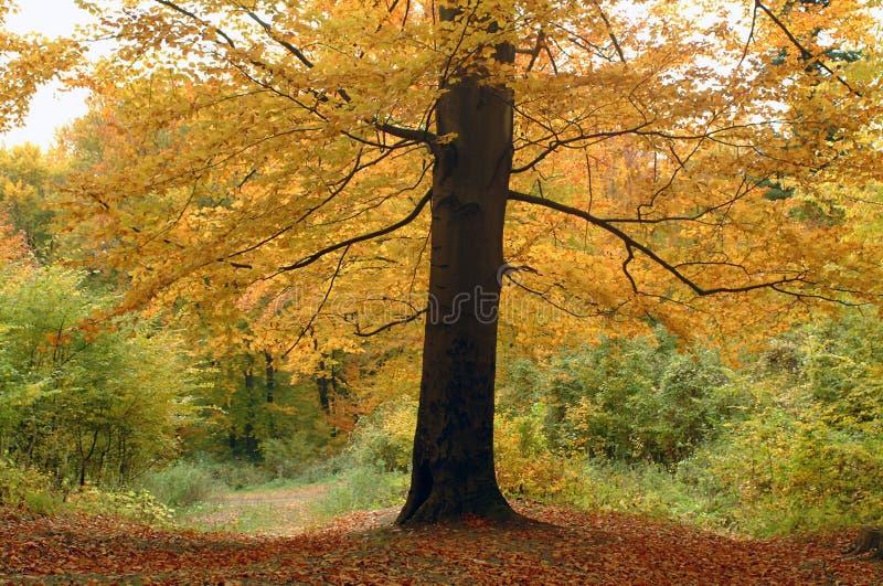 pojedyncze drzewo zdjęcia royalty free