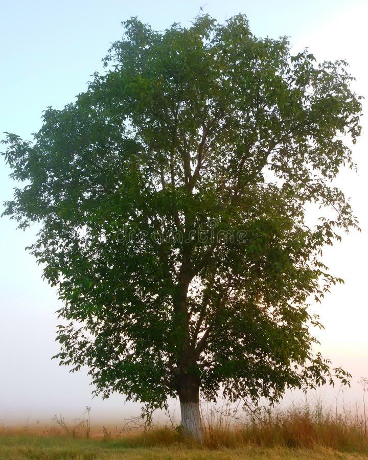 pojedyncze drzewo fotografia royalty free