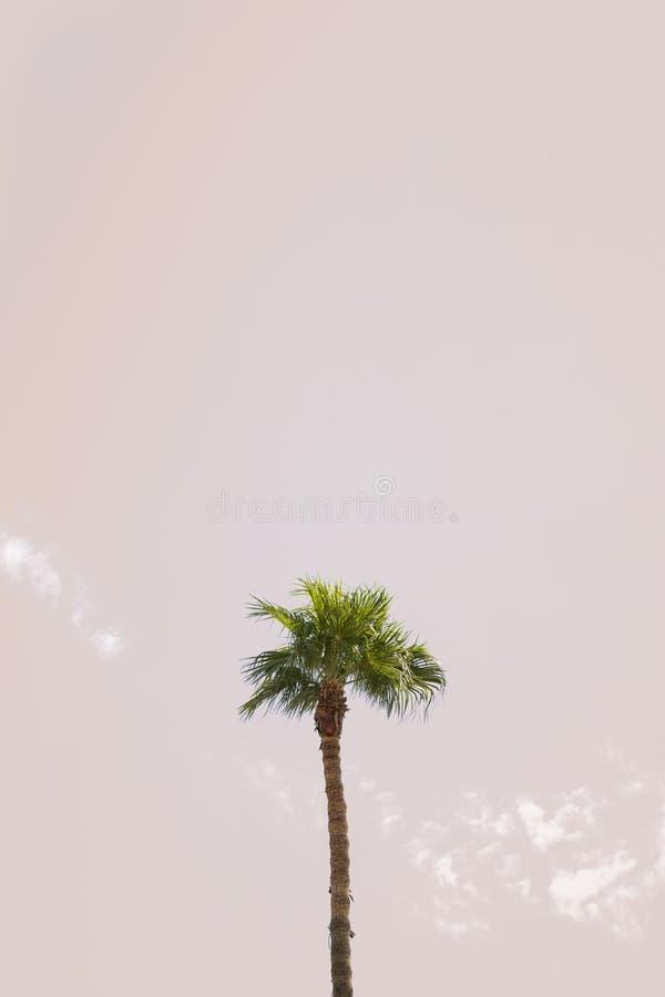 pojedyncze drzewo dłonie zdjęcie stock