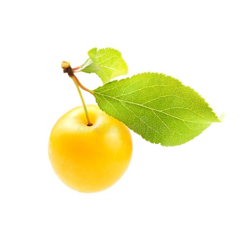 Pojedynczego żółtego mirabela Prunus domestica śliwkowy syriaca z zielonym liściem odizolowywającym na białym tle zdjęcia stock