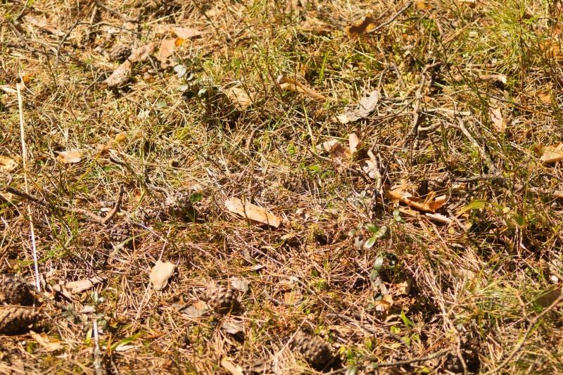 pojedynczy bia?e t?o trawy Natury kwiecista tekstura ??kowy t?o fotografia royalty free