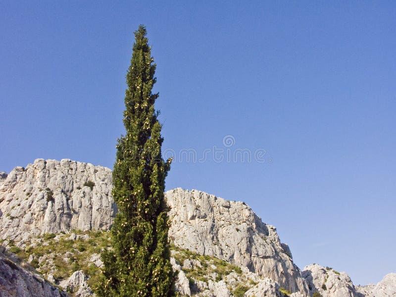Pojedynczy cyprys w górach w Chorwacja fotografia royalty free