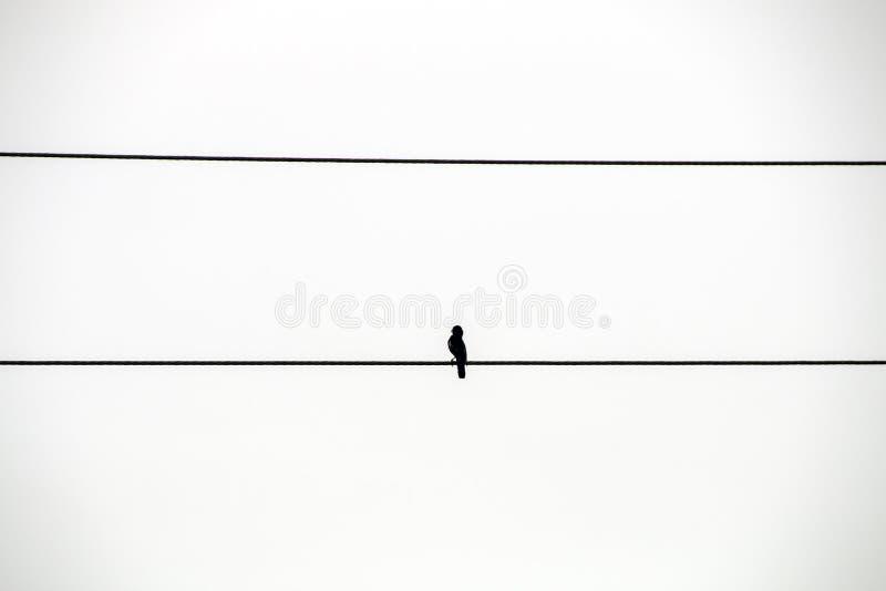 Pojedynczy Czarny ptak Umieszczający na władza kablu obraz royalty free