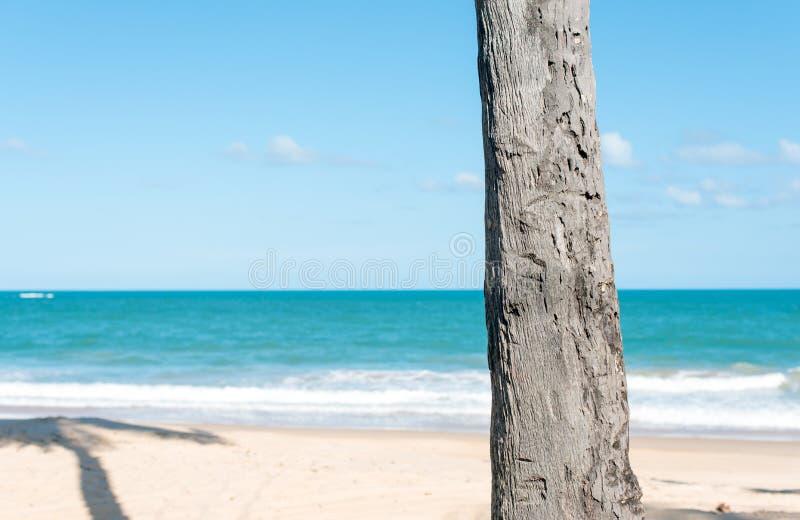 Pojedynczy drzewko palmowe bagażnik fotografia royalty free