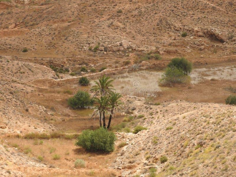 Pojedynczy drzewko palmowe w mieście Matmata, Tunezja, Afryka zdjęcia royalty free