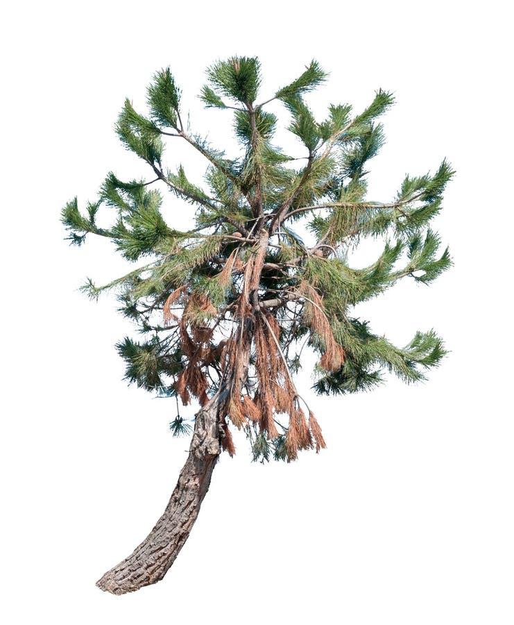 pojedynczy drzewo ilustracja wektor
