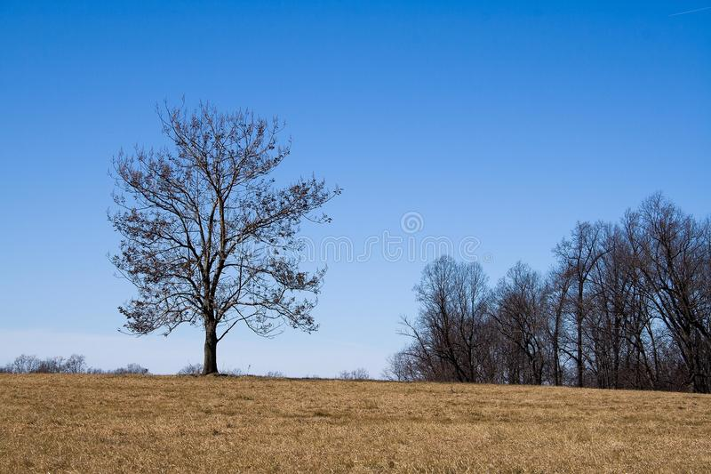 pojedynczy drzewo fotografia royalty free