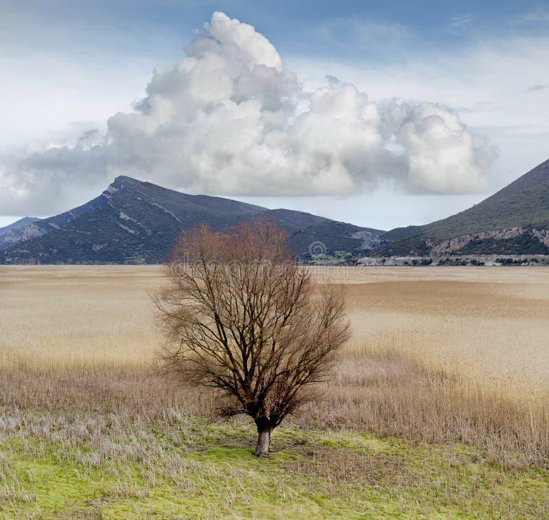 Pojedynczy drzewo na jeziorze obrazy royalty free