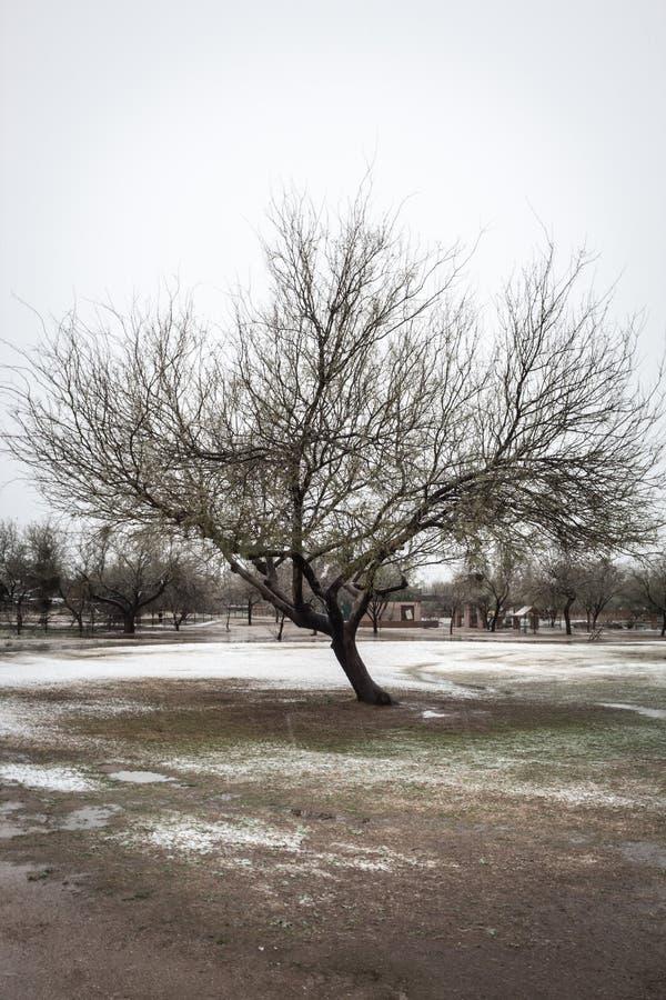 Pojedynczy drzewo w śnieżnym parku przeciw chmurnemu niebu obrazy royalty free