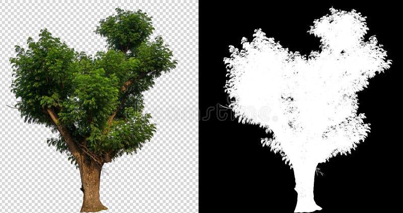 Pojedynczy drzewo z ścinek ścieżką ilustracji
