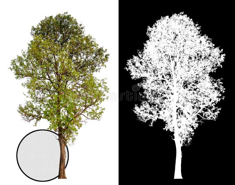 Pojedynczy drzewo z ścinek ścieżką ilustracja wektor