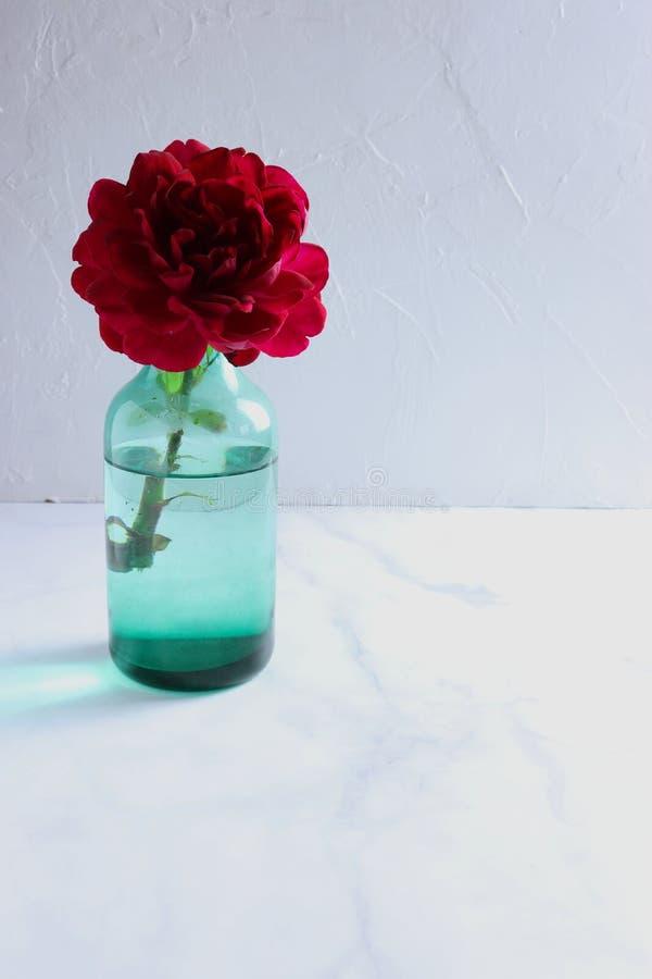 Pojedynczy głęboki - czerwieni róża w wazie, lekki tło obraz royalty free