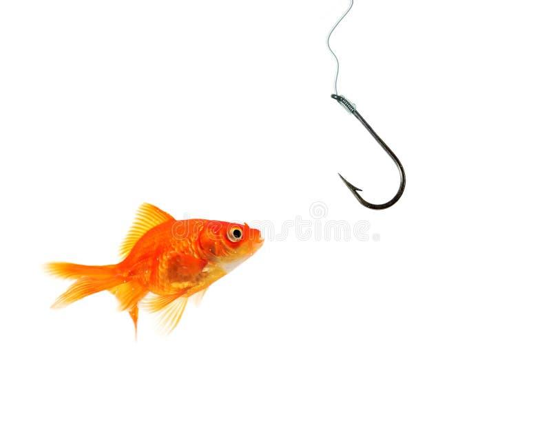 pojedynczy goldfish pusty okładzinowy haczyk zdjęcia stock