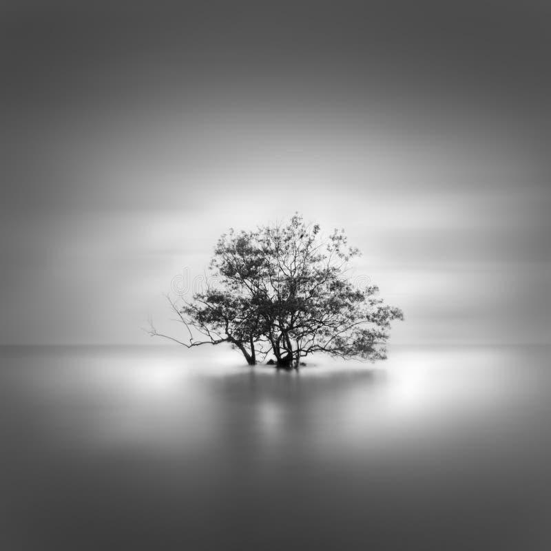 Pojedynczy i osamotniony stary drzewo obraz royalty free