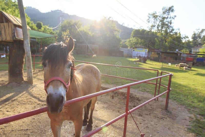 Pojedynczy koń za ogrodzeniami obrazy royalty free