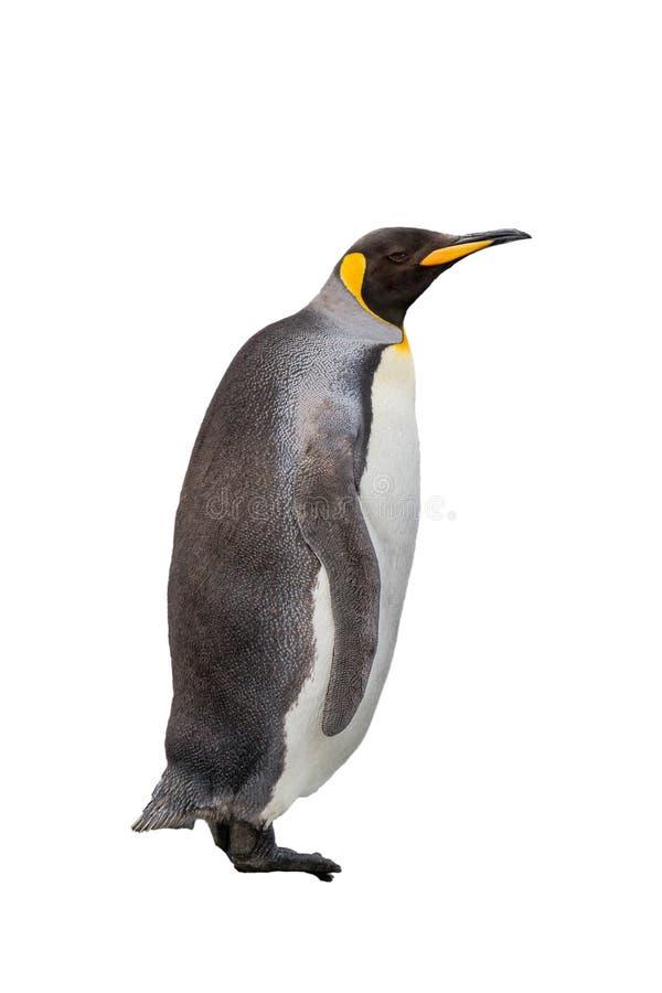 Pojedynczy królewiątko pingwin odizolowywający na białym tle fotografia stock