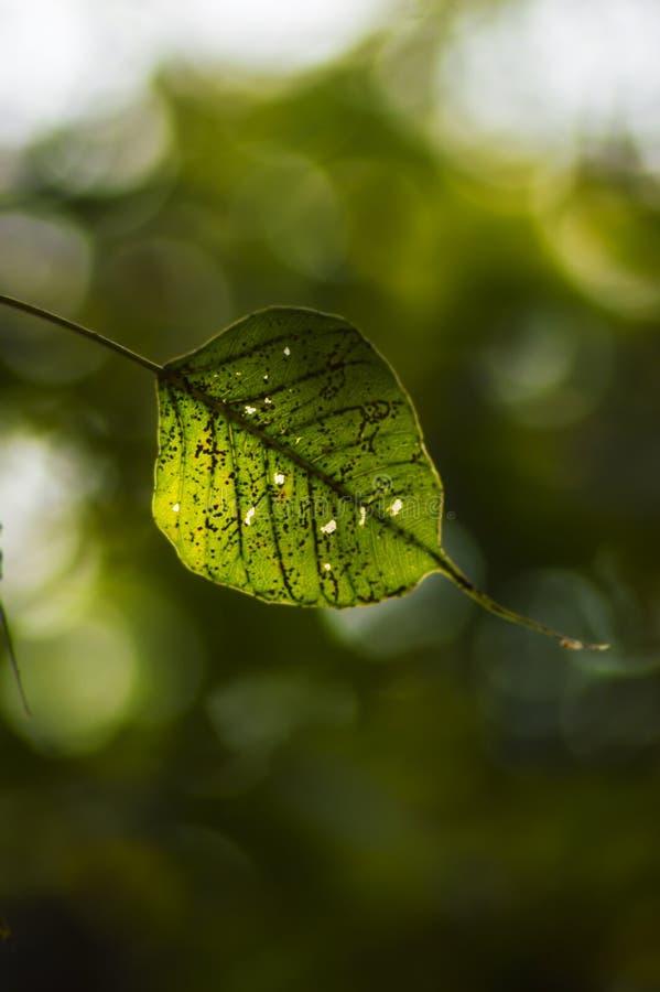 Pojedynczy liść! obrazy stock