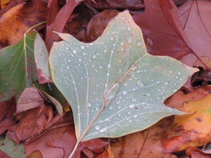 Pojedynczy liść na ziemi zakrywającej z podeszczowymi kroplami obrazy stock