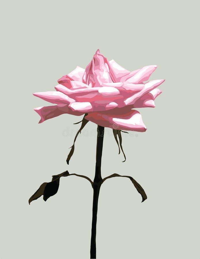 Pojedynczy menchii róży wektor obrazy stock