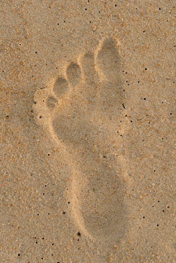 Pojedynczy nożny druk na piasku obrazy royalty free