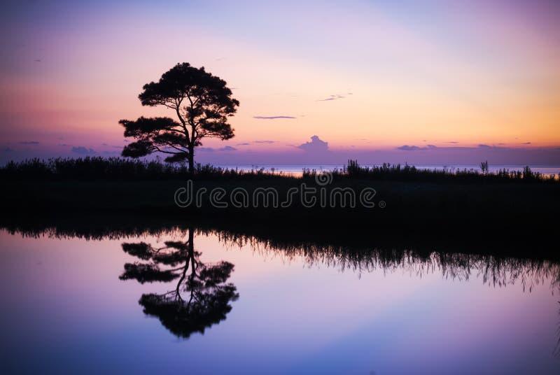 pojedynczy odbicia drzewo obraz royalty free